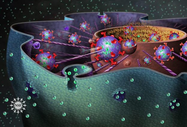 eukaryotic cell