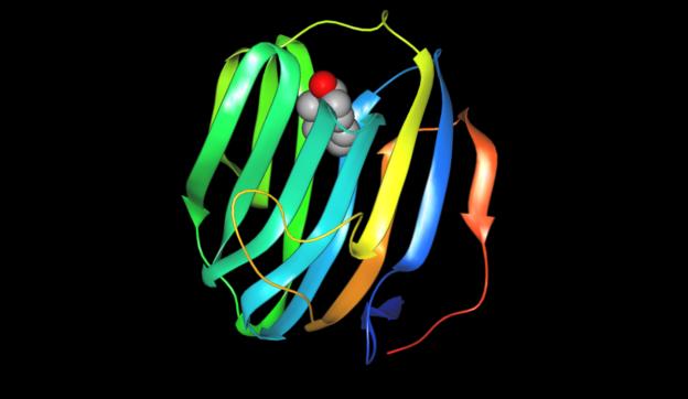 sex hormone-binding globulin