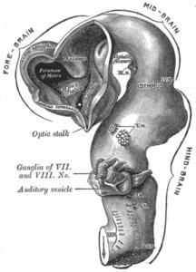 cephalic flexure