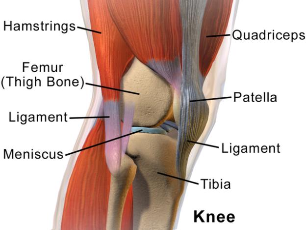 anatomy-of-knee