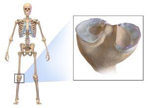 Meniscus of the knee
