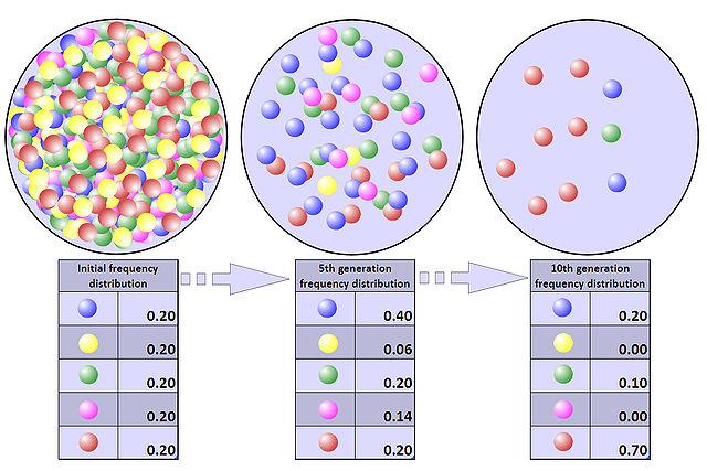 Population-bottleneck