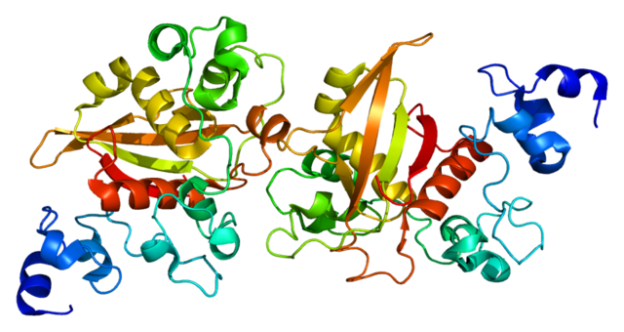 Protein NOTCH2 PDB alagille syndrome