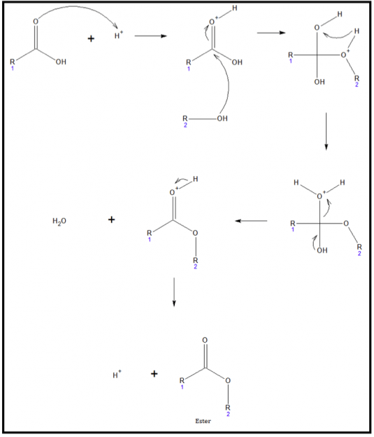 Acid-catalyzed esterification