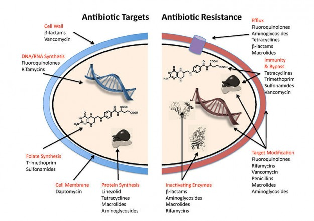 Antibiotic targets and mechanisms of resistance.
