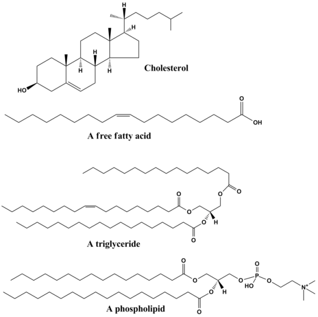 Common lipids
