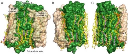 Crystal structure of Escherichia coli-expressed Haloarcula marismortui bacteriorhodopsin digestions of lipids