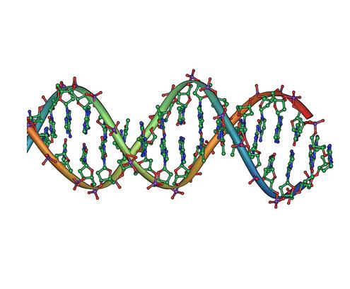 DNA double helix horizontal