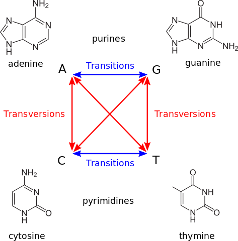 Definition of transitions and transversions