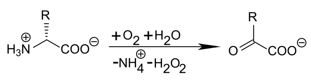 Desamination of a D-amino acid with D-amino acid oxidase