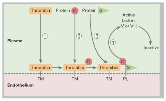 Inherited thrombosis
