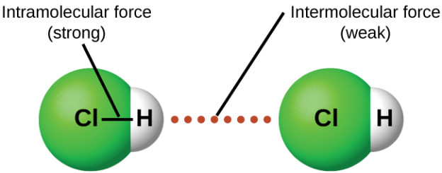"Image: ""Intramolecular forces keep a molecule intact. Intermolecular forces hold multiple molecules together and determine many of a substance's properties."" by OpenStaxCollege. License: CC BY 4.0"