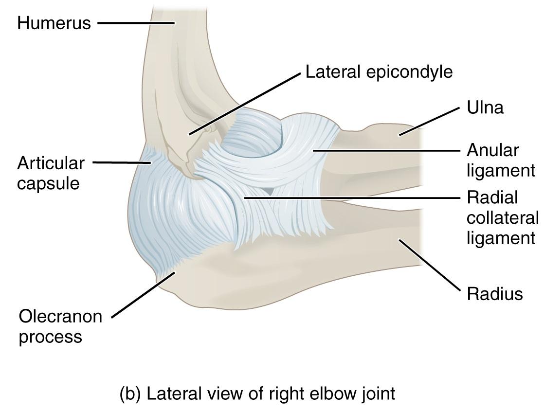 Right Elbow Diagram - Data Wiring Diagrams •