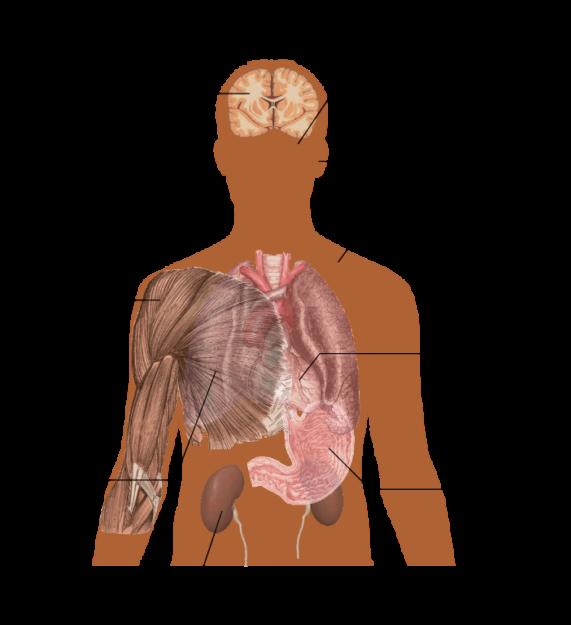 Main symptoms of Caffeine overdose