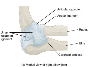 Medial view of right elbow joint