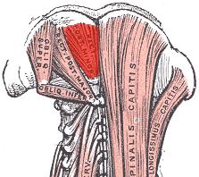 Minor-posterior-rectus-capitis