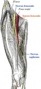 N.-femoralis