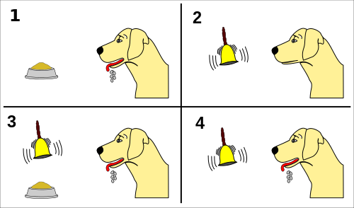 Ivan Pavlov's conditioning experiments with dogs