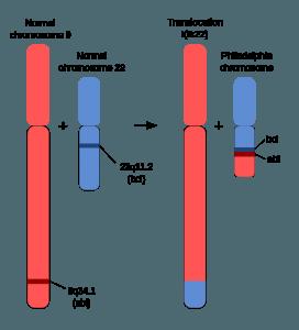 Schematic of the Philadelphia Chromosome