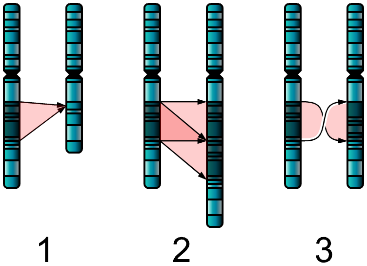 Single Chromosome Mutations