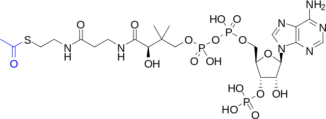 Skeletal structure of acetyl-CoA with the acetyl group highlighted