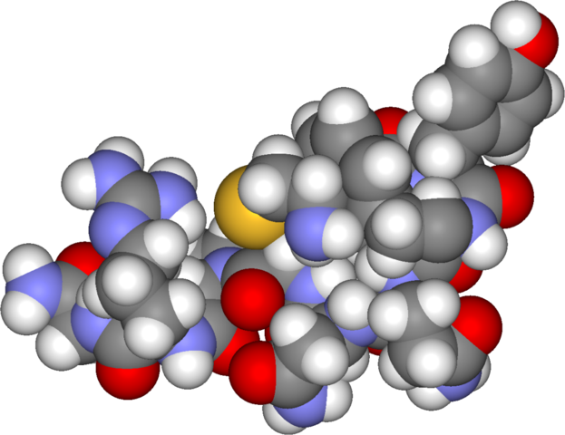 Spacefilling model of arginine vasopressin