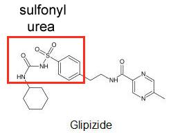sulfonyl urea glipizide