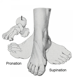 Supination and Pronation feet