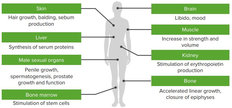 mamld1 mutation and phenotypes of hypospadias Mamld1 mutations in hypospadiac patients  genitalia, ranging from  hypospadias to feminized genitalia (detailed phenotypes are unknown.