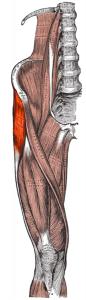 Tensor fasciae latae