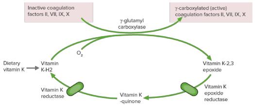 Warfarin - thrombosis
