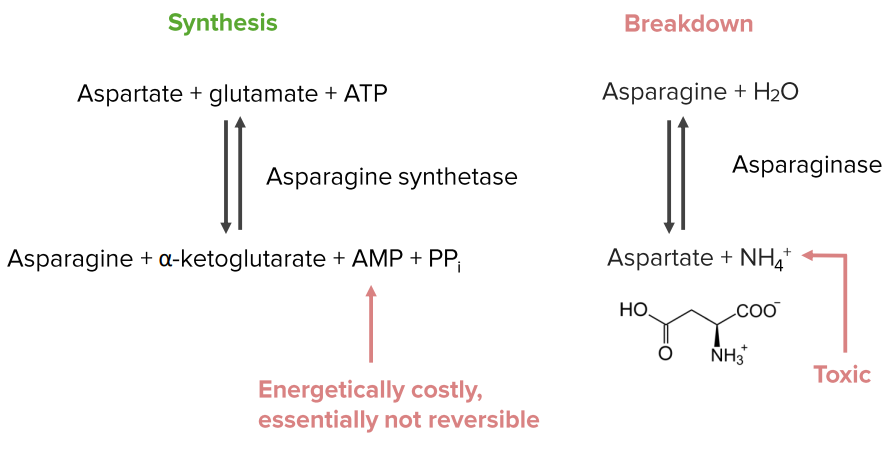 breakdown and resynthesis