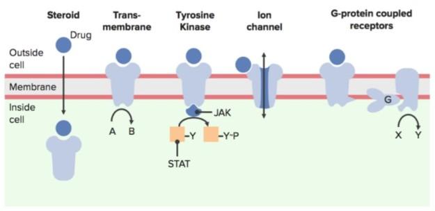 basic types of transmembrane receptors