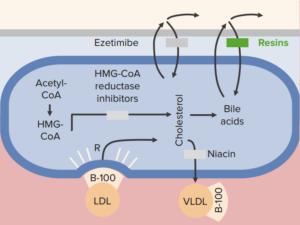 bile-acid