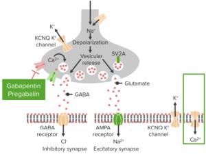 calcium-channel-blockade