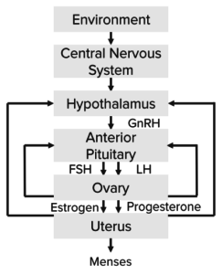 causes-of-primary-amenorrhea