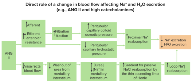 change-in-blood-flow