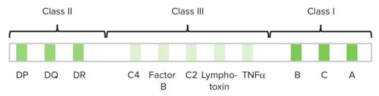 chromosome-6