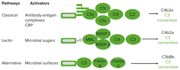 complement-system