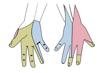 The cutaneous innervation of the right hand by Henry Gray. License: Public Domain