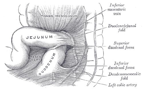 Jejunum und Ileum