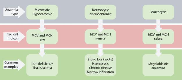 diagnosis-anemia