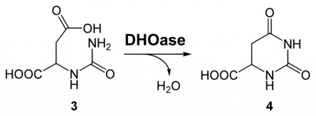 dihydroorotat