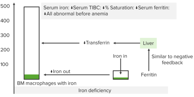 iron-studies-iron-deficiency-anemia
