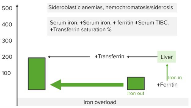 iron-studies-sideroblastic-anemia