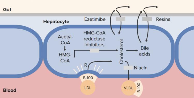 lipid-control2