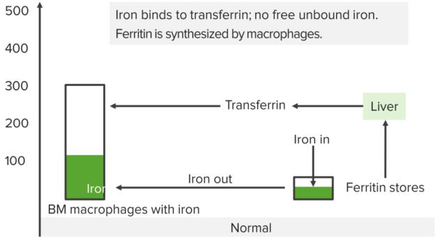 normal-iron