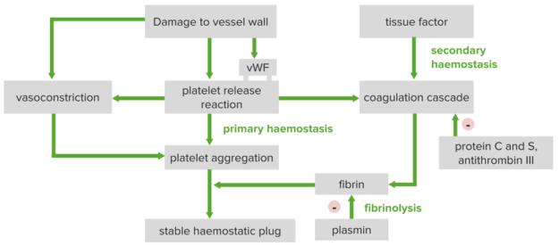 overview of hemostasis thrombosis