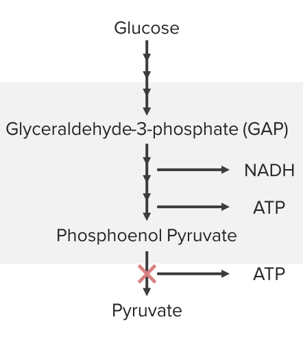 pyruvate-kinase-defect