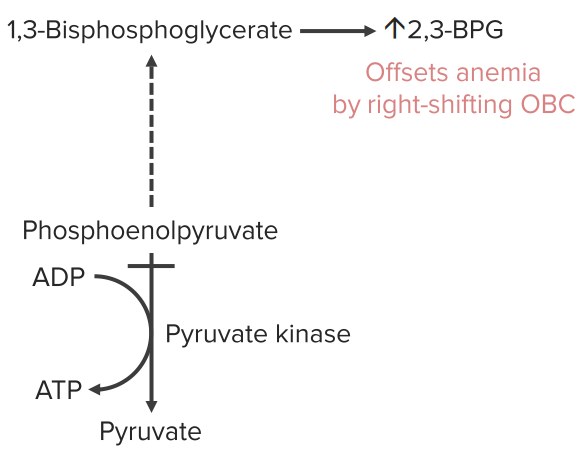 pyruvate-kinase-defect2